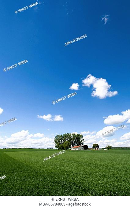 Isolated farmstead, farm in grain field in the spring, between Ingolstadt and Riedenburg, Bavaria, Germany