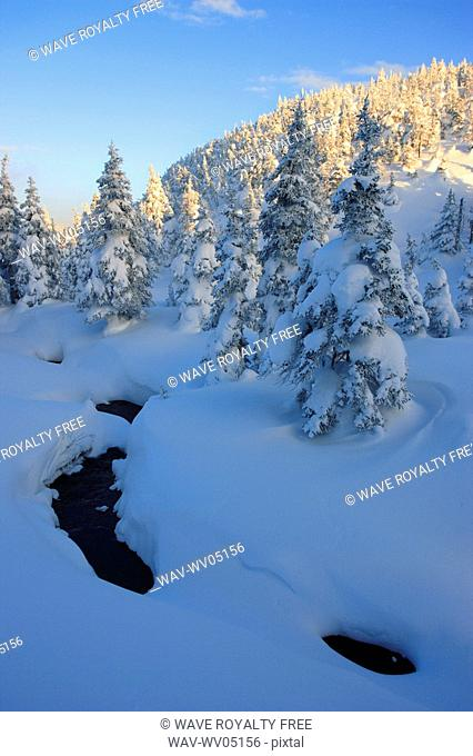 View of brook and snow-covered trees, Quebec, Canada