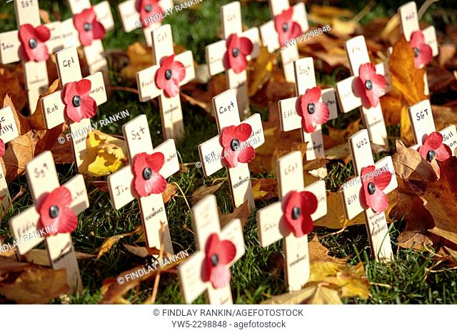 Remembrance day crosses and poppies, George Square memorial garden, Glasgow, Scotland, UK
