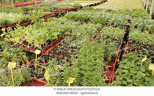 Production of medicinal plants and edible flowers. Balaguer, Lleida. Catalonia, Spain