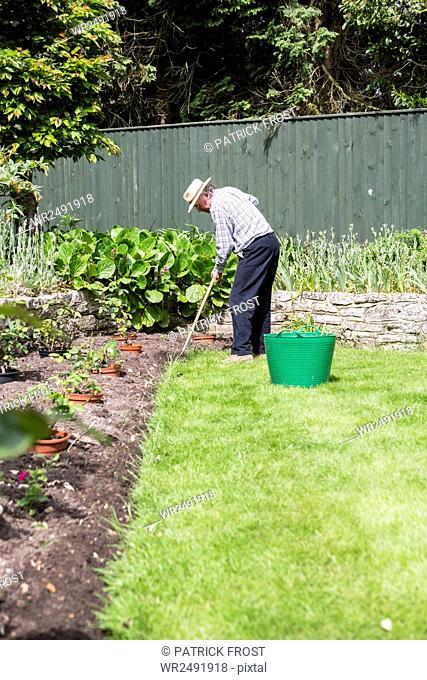 Senior man removing weeds in garden