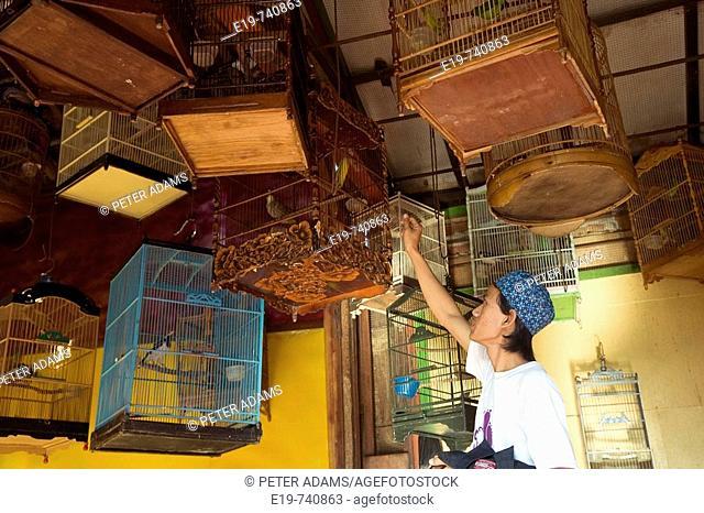 Bird market, Yogyakarta, Indonesia
