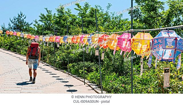 Rear view of female tourist strolling past rows of lanterns, Naksansa Temple, Naksansa, Yangyang, Gangwon province, South Korea
