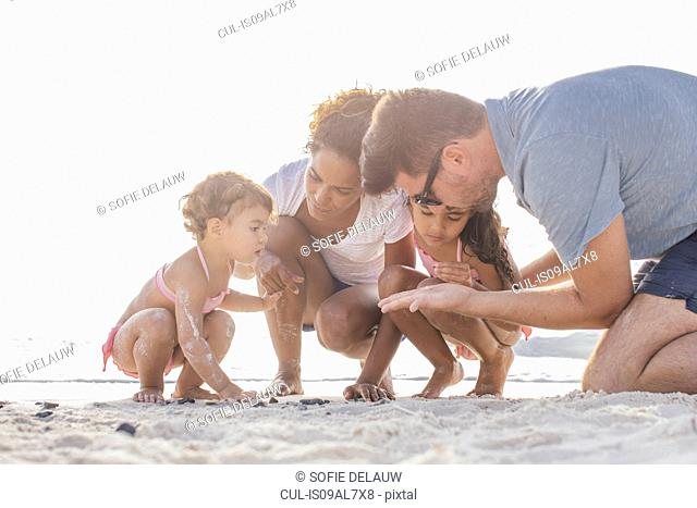 Couple with two girls looking for seashells on beach, Tuscany, Italy
