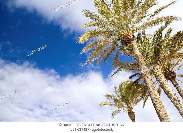 Malvarrosa beach. Valencia, Comunidad Valenciana, Spain