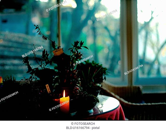 candlelight, interior, flower, candle, table, film