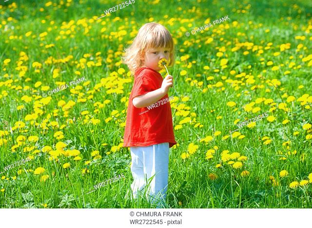 boy 2, 5 years, holding dandelion standing in a spring field