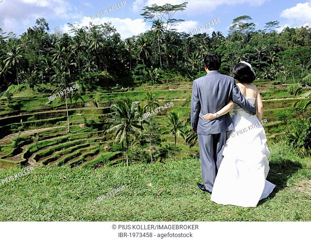 Korean wedding couple, arm in arm in front of a rice terrace in Ubud, Bali, Indonesia, Southeast Asia