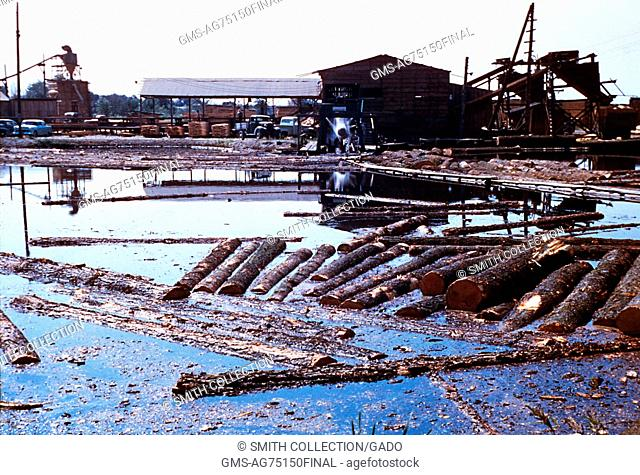 Here we find an Oregon log pod acting as a mosquito breeding place, 1975. This polluted Oregon log pond contaminated with waste from logging activities is...