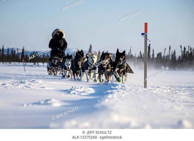 Jessie Royer approaches the Cripple checkpoint during the Iditarod Sled Dog Race 2014