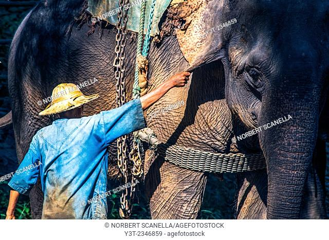 Asia. Thailand, Chiang Dao. Elephant center. Mahout and his elephant