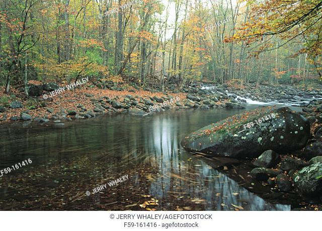 Little Pigeon River in autumn. Great Smoky Mountains National Park. Tennessee. USA
