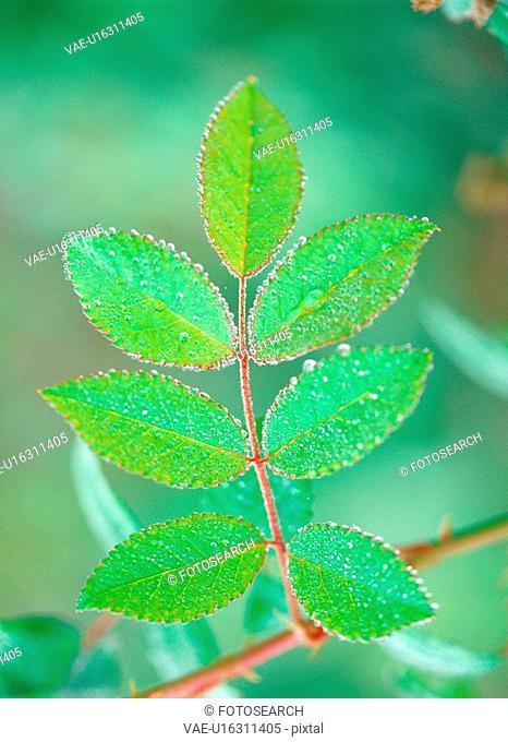 waterdrop, leaf, plants, plant, film