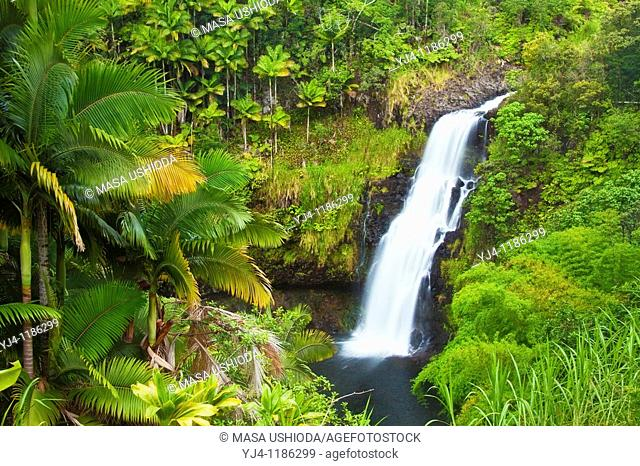 Kulaniapia Falls, tropical rainforest jungle, Hilo, Big Island, Hawaii, USA