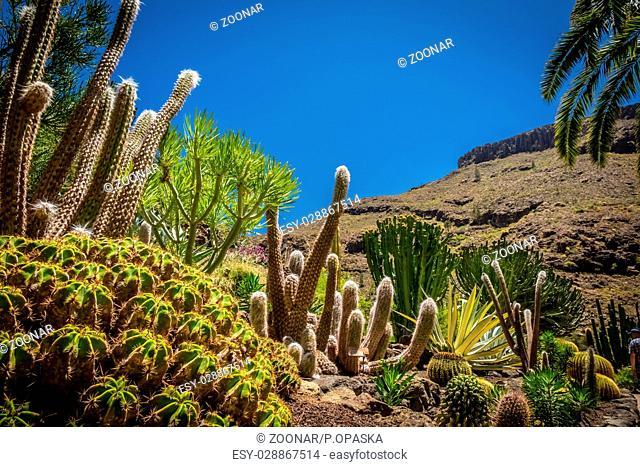 Cactus park in Gran Canaria