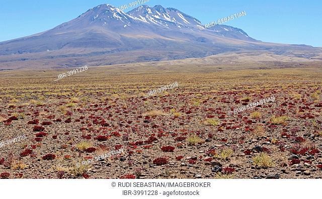 Atacama Desert, San Pedro de Atacama, Chile, South America