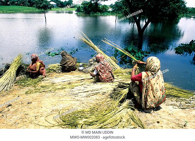 Rural women processing raw jute