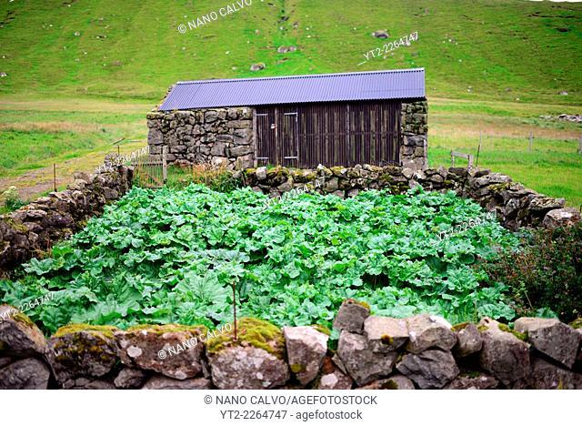 Vegetable patch in Trøllanesi, Kalsoy, Faroe Island