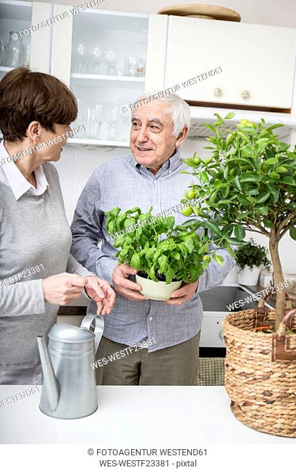 Senior couple watering potted plants in kitchen