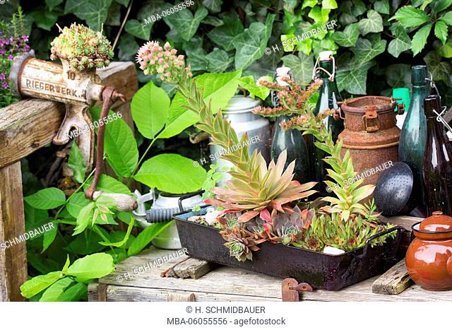 Old kitchen utensils with plants in the garden
