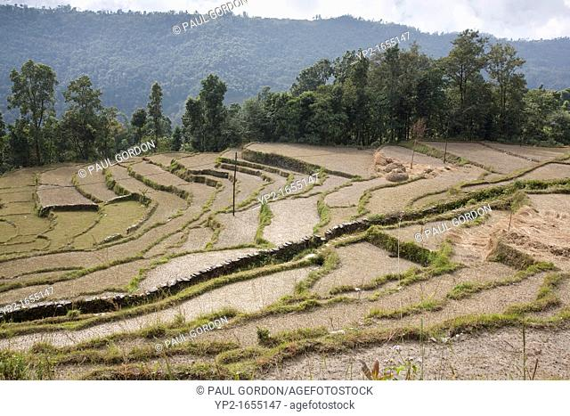 Footpath cutting through a terraced rice field - Pokhara Valley, Nepal - Dhampus Village, Gandaki Zone, Nepal