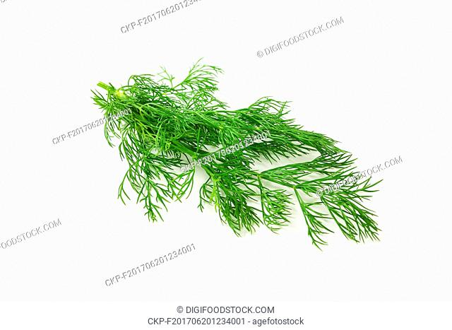 Sprigs of fresh dill weed on white background