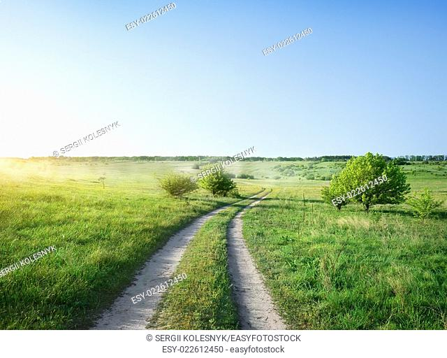 Road in the field at the sunrise