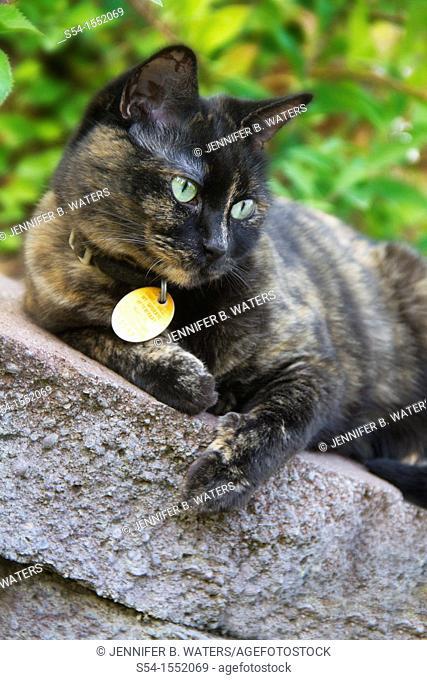 A housecat outdoors in Spokane, Washington, USA