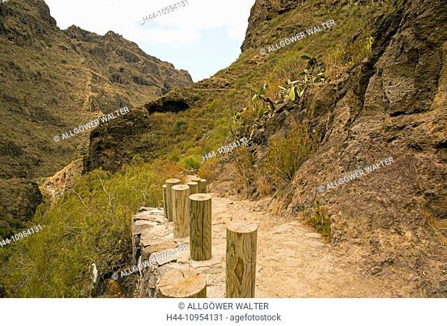 Adeje, outside, Barranco, mountains, mountainous, mountain landscape, erosion, erosion scenery, landscape, Euphorbia, Euphorbiaceae, Europe, rock, cliff, rocky