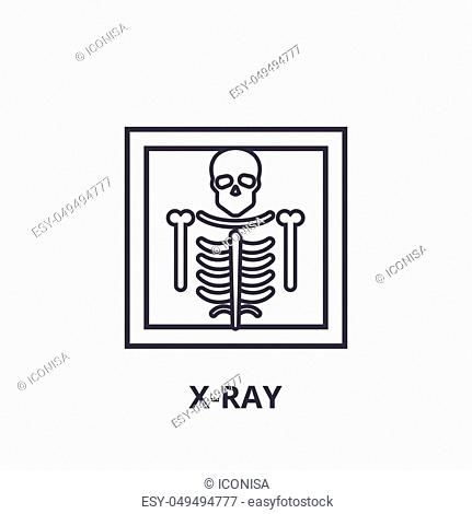 x ray thin line icon, sign, symbol, illustation, linear concept vector