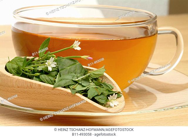 Hoary Willowherb (Epilobium parviflorum) infusion