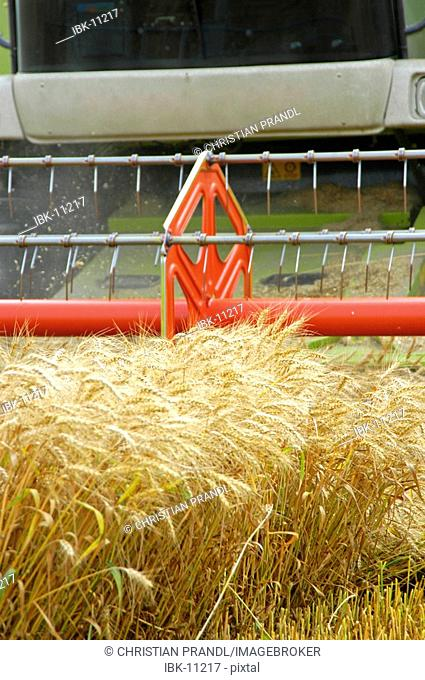 A combine Harvester harvesting crops - Closeup of the harvesting tool