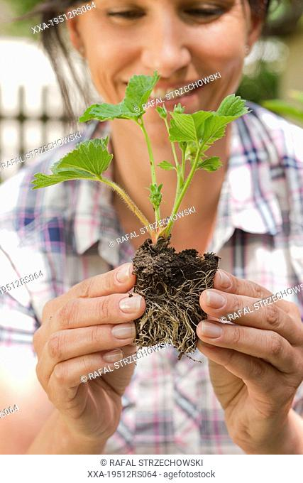 Woman holding strawberry seedling