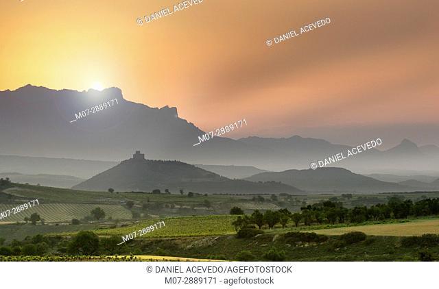 Davalillo Castle and vineyards, summer around San Asensio area, La Rioja, Spain. Europe