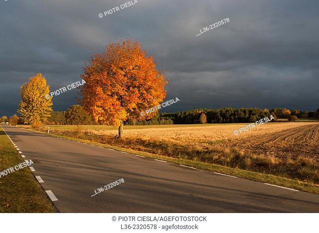 Autumn road. Podlasie region. Poland