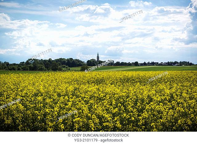 Church tower rises above spring rapeseed field, Scmicz - Schmitsch, Opole Voivodship, Poland