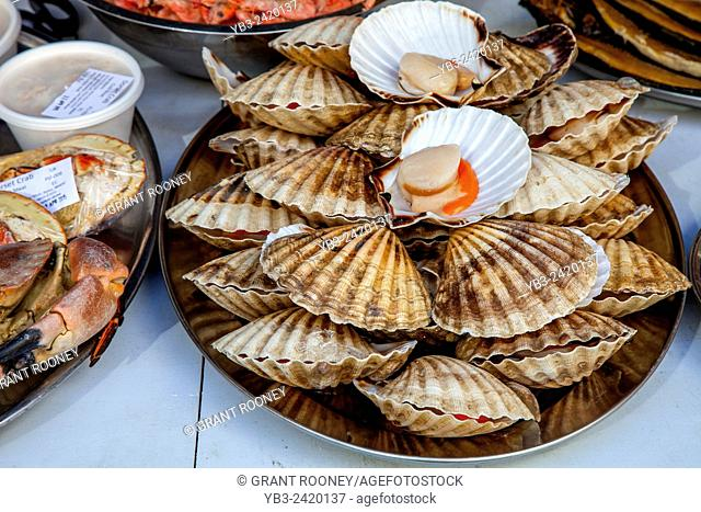 Fresh Scallops For Sale At The Saturday Farmers Market In Heron Square, Richmond Upon Thames, London, England