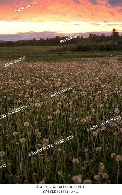 Tall weeds growing in rural field