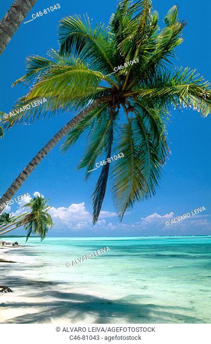 Beach, Punta Cana. Dominican Republic