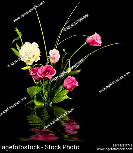 Pink and white eustoma flowers
