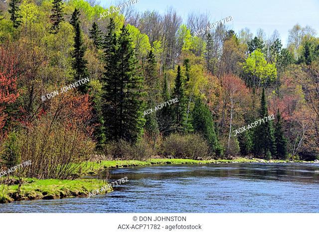 Spring foliage along the banks of Junction Creek, Greater Sudbury (Naughton), Ontario, Canada