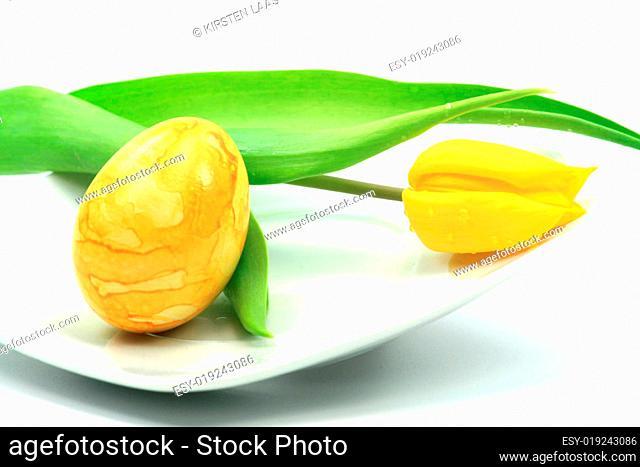 Tulpe mit Osterei