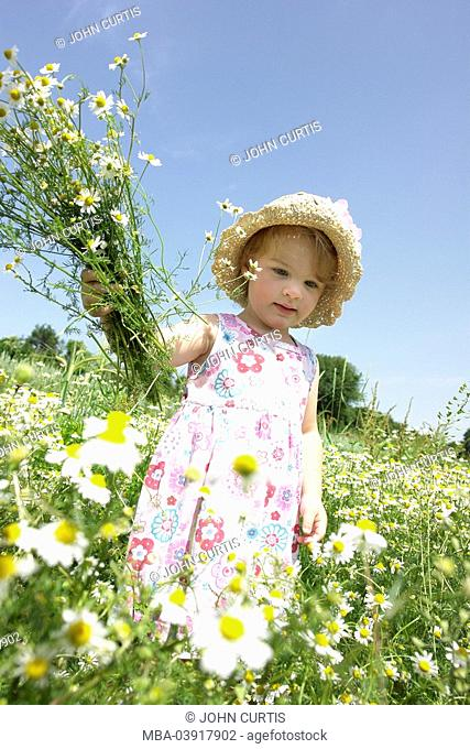 Child, girl, meadow, picking flowers