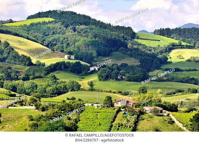 'Txakoli' vineyards, Getaria, Guipuzcoa, Basque Country, Spain