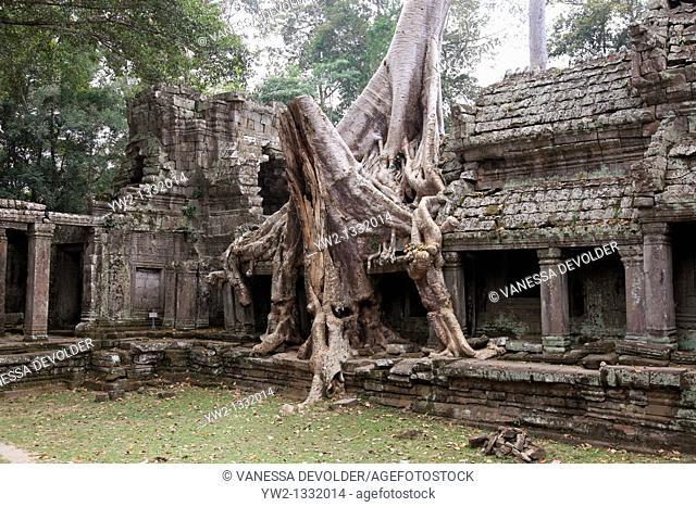 Preah khan at Angkor in Cambodia  V10CAM0125RM