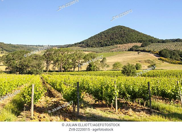 Vineyards near to Montalcino, Tuscany. The town is famous for producing Brunello di Montalcino wine as well as Rosso di Montalcino