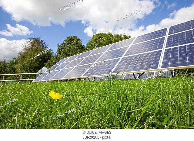 Large solar panels with small flower in foreground