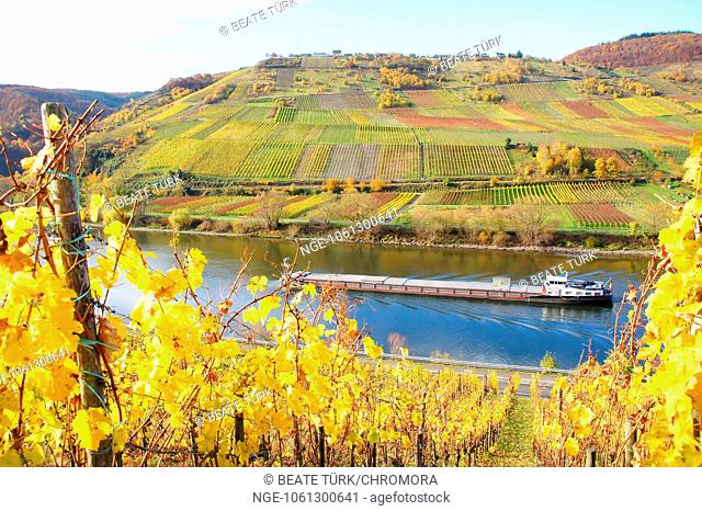 Ship of the moselle between the vineyards