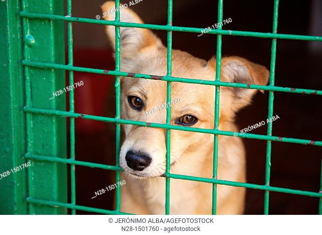Dog in a animal shelter