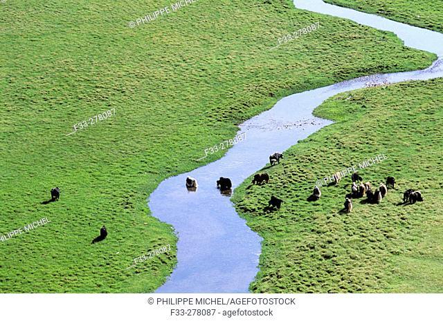 River Egiin Gol. Lake Khovsgol Nuur. Khovsgol province. Mongolia